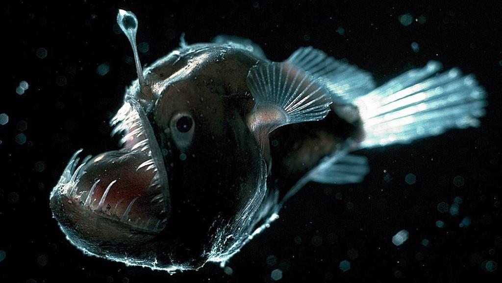 la signature planétaire de Mars dans les forces formatrices de la nature Deep-sea-anglerfish