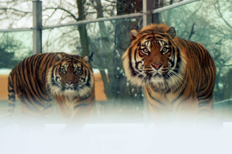 Zoo Wrocławatrakcje Dolny śląskzwiedzanieogród